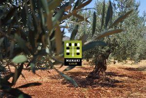 Olivolja från eget träd