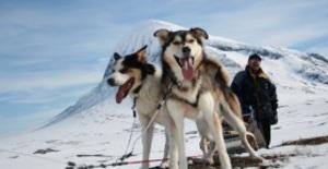 Hundspannsäventyr i Lappland