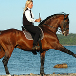Lyxlektion på Lusitanohäst för två